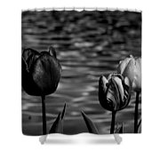 Tulips In Black And White Shower Curtain