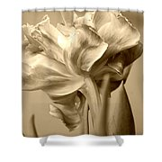 Tulips In Sepia Shower Curtain