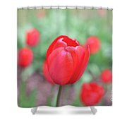 Tulips In Spring 4 Shower Curtain