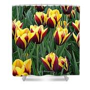 Tulips In The Garden Shower Curtain