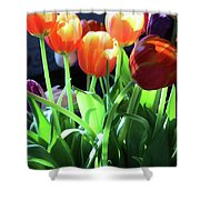 Tulips In The Light Shower Curtain