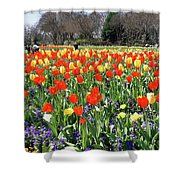 Tulips In The Park. Shower Curtain