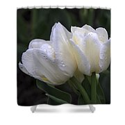 Tulips In The Rain Shower Curtain