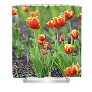 Tulips In The Springtime Shower Curtain