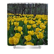 Tulips In The Woods Shower Curtain