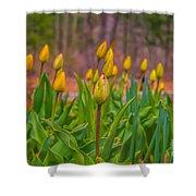 Tulips Love Shower Curtain