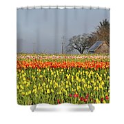 Tulips Morning Landscape Shower Curtain