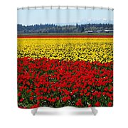 Tulips Of The Skagit Valley Shower Curtain