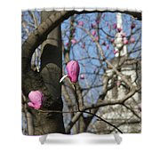 Tulips On Trees  Shower Curtain