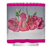Tulips On White Shower Curtain