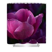 Tulips Purple Layers Shower Curtain