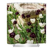 Tulips Surround The Bird Bath Shower Curtain