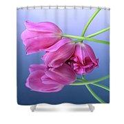 Tulips .tulipa. Shower Curtain