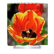 Tulips Yellow Red Shower Curtain