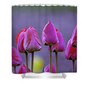 Tullips  Shower Curtain