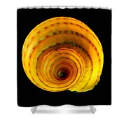 Tun Shell Shower Curtain
