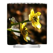 Tundra Rose Shower Curtain