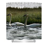 Tundra Swans And Cygents Shower Curtain