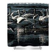 Tundra Swans Shower Curtain