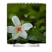 Tung Flower On Tea Tree Shower Curtain
