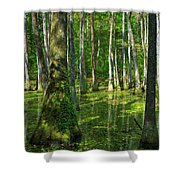 Tupelo Trees In Mississippi  Shower Curtain