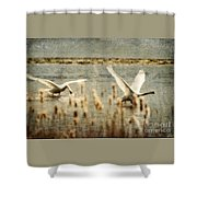 Turf Wars Shower Curtain by Lois Bryan