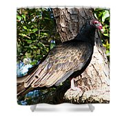 Turkey Buzzard Shower Curtain