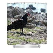 Turkey Buzzard  Shower Curtain