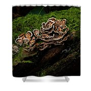 Turkey Tail Shower Curtain