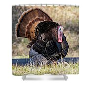 Turkey Tom Struts Shower Curtain