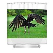 Turkey Vulture In Flight Shower Curtain