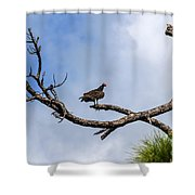 Turkey Vulture On Dead Tree Shower Curtain
