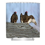 Turkey Vultures On Roof Shower Curtain