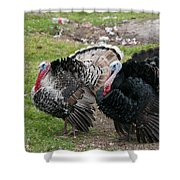 Turkeys In The Yard At Laguna Guerrero Shower Curtain