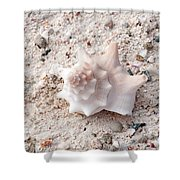 Turks And Caicos Shell Shower Curtain