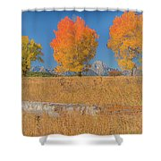 Turning Of Leaves Shower Curtain