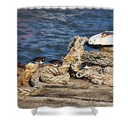 Turnstones At The Harbour Shower Curtain