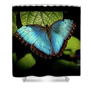 Turquoise Beauty Shower Curtain