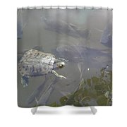 Turtle Amongst Fish Shower Curtain
