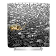 Turtle And Fish School Shower Curtain