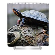 Turtle And The Hippo Shower Curtain