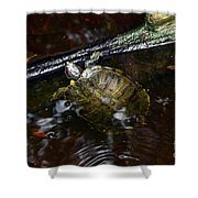 Turtle And The Stick Shower Curtain