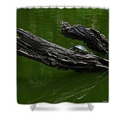 Turtle Art Shower Curtain