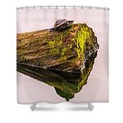 Turtle Basking Shower Curtain