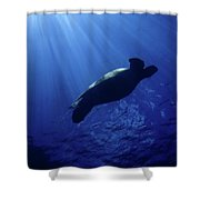 Turtle Beams Shower Curtain