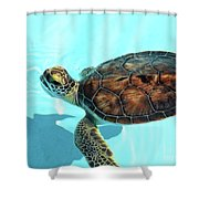 Turtle Close-up  Shower Curtain
