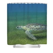 Turtle Cove Glide Shower Curtain