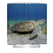 Turtle Cove Shower Curtain