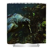 Turtle Crawl Shower Curtain
