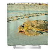 Turtle Day Shower Curtain